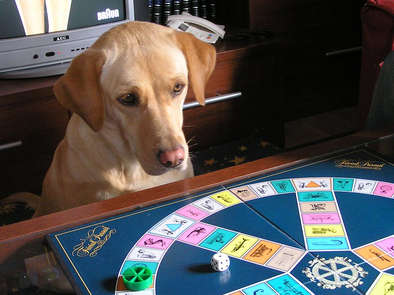 A dog staring at a Trivial Pursuit board