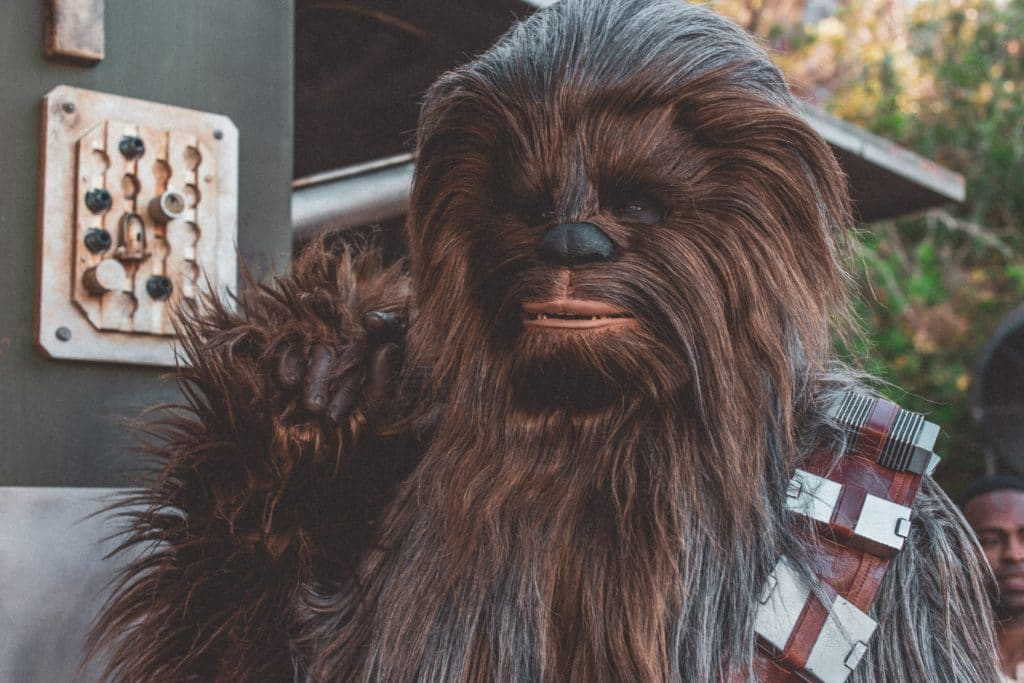 Someone dressed up as Chewbacca from Star Wars