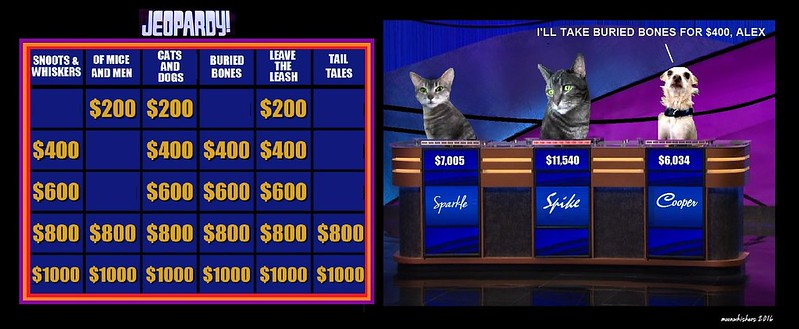 Two cats and a dog as contestants on Jeopardy!